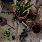 10 Outils de Jardinage Indispensables !